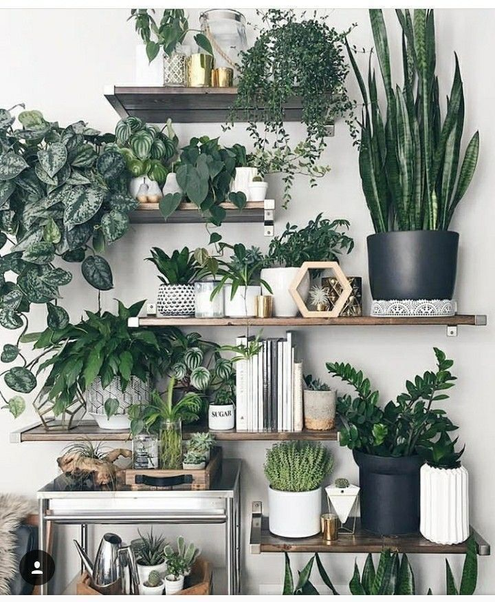Indoor Plants 10 Best House Plants Plant Decor Plants House Plants