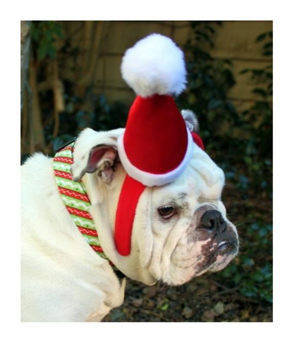 Bulldog Christmas Cards