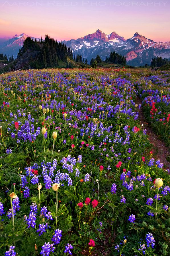Cascade Mountains, WA