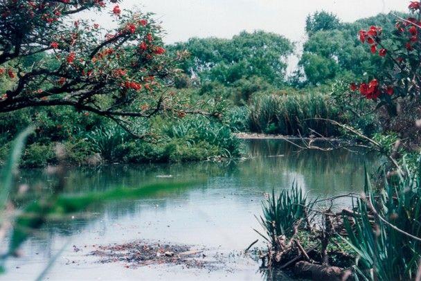 Reserva ecológica. Gentileza Municipalidad de San Isidro.