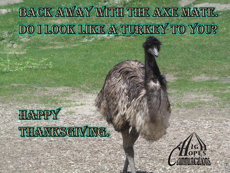 Back away with the axe mate. Do I look like a turkey to you? Happy Thanksgiving. www.highhopescommunications.ca