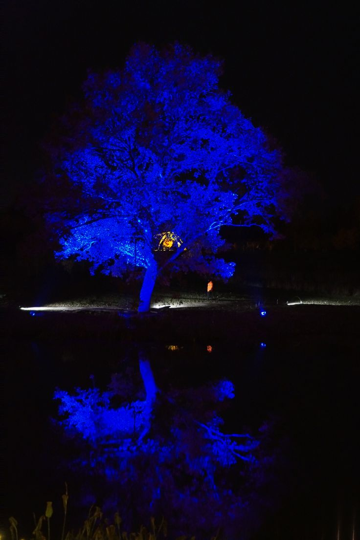 Pin by andrew smith on glow winter illuminations winter