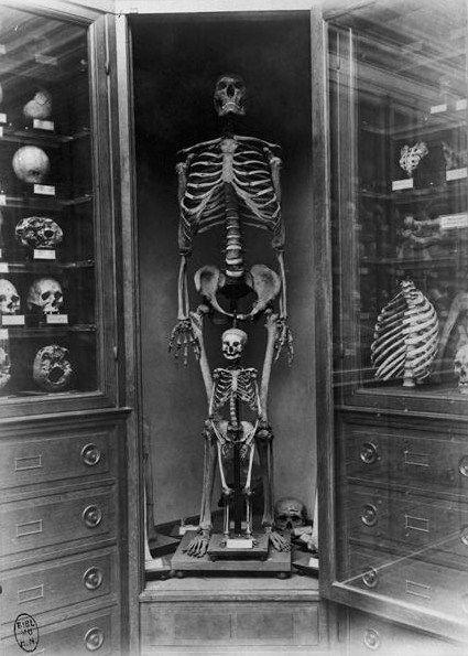 skull and bones, human skeleton