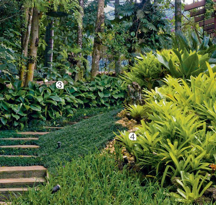 Ao redor da escada, lírio-da-pazgigante (Spathiphyllum ortgiesii) (3) e bromélia-de-ninho (Neoregelia compacta) (4).