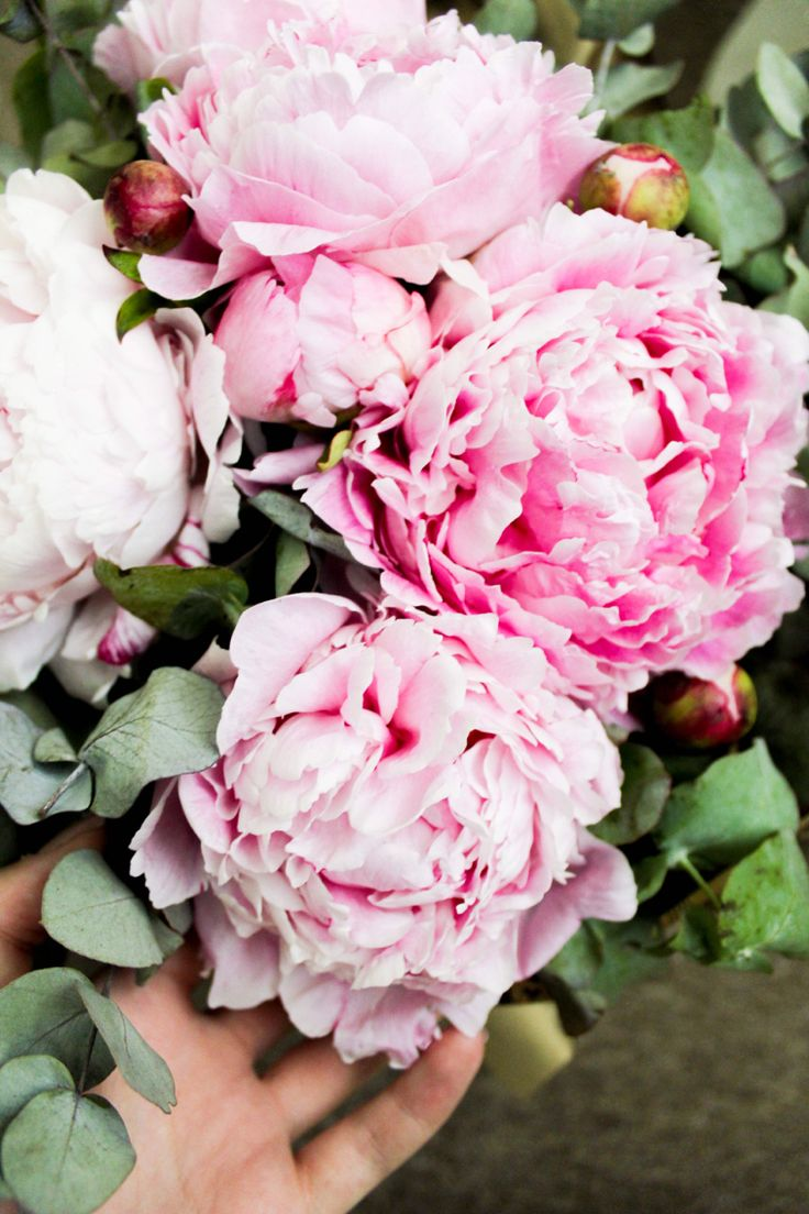 Peonies.💕 Be inspired | By DorothyPuscas