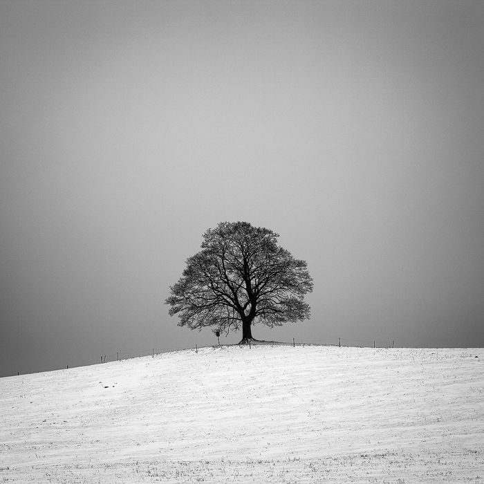 "Photo ""Maple"" by Martin Rak (@martas_) #500px"