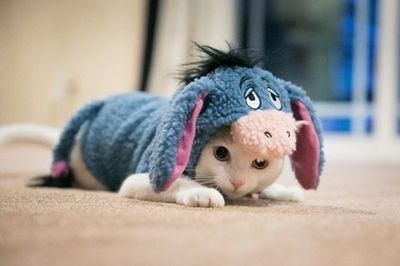 Having a bad day ? Just look at this adorable little baby kitten in a Eyore costume.