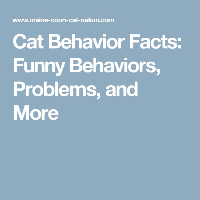 Cat Behavior Facts: Funny Behaviors, Problems, and More