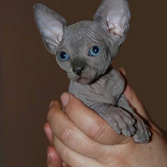 Ugly Birthday Cat: 25+ Best Ideas About Ugly Baby Pictures On Pinterest