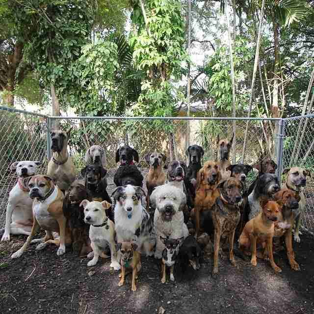 Glorious Group Photos Show The Happiest Pack Of Dogs In Town