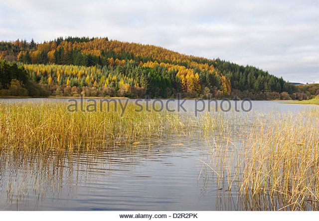 Woodhall Loch, near Laurieston, Dumfries and Galloway, Scotland, United Kingdom, Europe - Stock Image