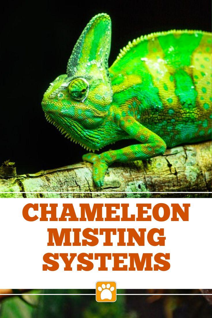 Best misting system for a chameleon guide