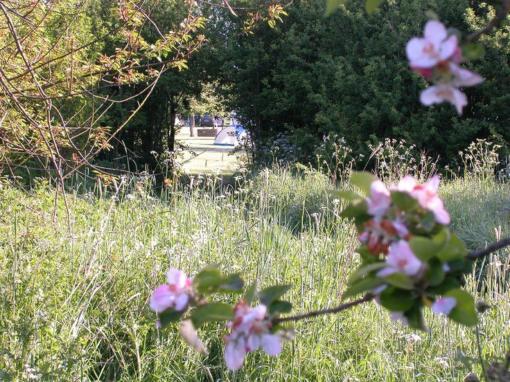 Orchard Park : Caravan and camping park for touring in Nottinghamshire. Lincolnshire Sherwood Forest, Dukeries