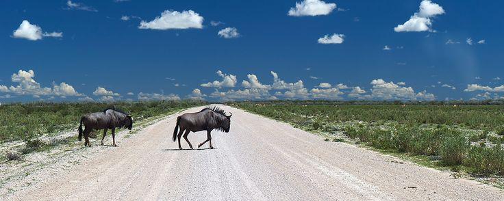 Kaokoland: how to do the wildest 4x4 trip in Namibia