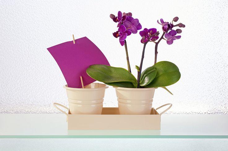 Sztuczne kwiaty - DecoArt24.pl