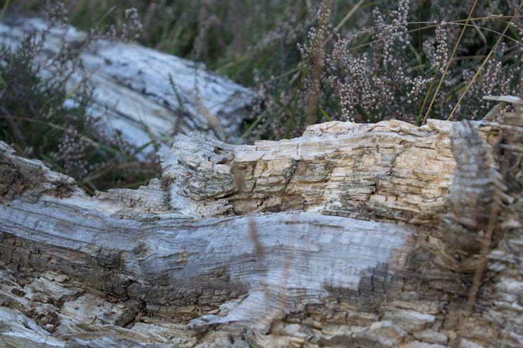 Buiten bos onkruid zon groen heide fotografie - outside sun wood green photography