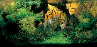 Grand Prize Works - The International Aquatic Plants Layout Contest
