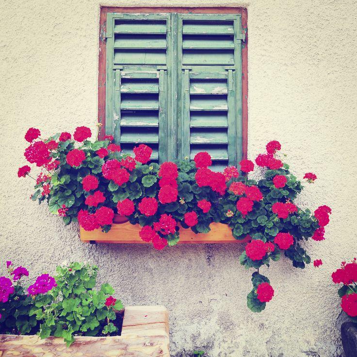 Pelargonie to kwiaty łatwe w uprawie, które kwitną przez cały sezon. Idealne na balkon, taras czy parapet. #flowers #plants #design #flora #patio #inspirations #designer