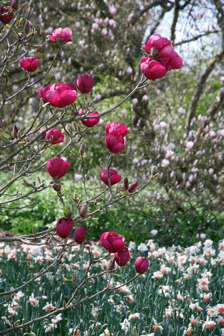 116 best garden ideas images on pinterest