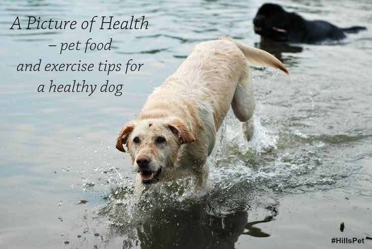 A Picture of Health – Pet food and exercise tips for a healthy dog plus your chance to #win with Hills