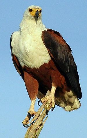 birdwatching_300.jpg S.A. has over 900 species of birds