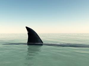 haaienvin - Google zoeken. Ik heb dit plaatje van een haaienvin gepint, omdat ik een haaienvin wil maken en je kan hier goed de vorm zien.