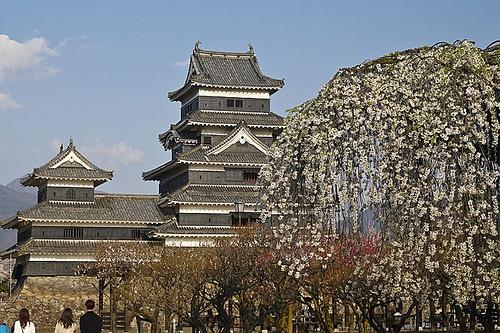 松本城と枝垂れ桜