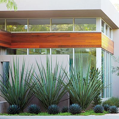 3 pro gardening secrets you need to know: DON'T mix it up: ow-water plants with strong silhouettes often look their best in multiples. Here, fanlike Mexican tree ocotillos (Fouquieria macdougalii)serve as a backdrop for equally spaced agaves (Agave 'Blue Glow') and low chartreuse Sedum rupestre'Angelina'. Design: Daniel Nolan;floragrubb.com. via @sunsetmag