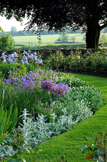 IIrises and boder edged with Stachys for contrast in spring/ summer .