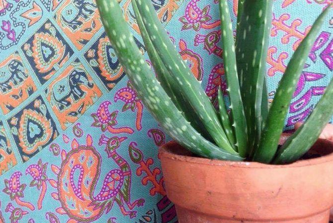 ¿Cuál será para ti? Esta es la planta que deberías tener en casa según tu signo del zodiaco - Vix