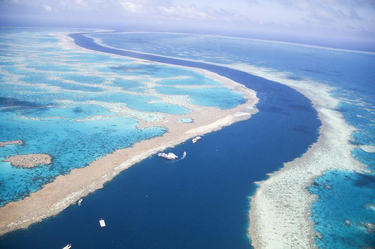 Vive la exótica aventura de la Gran Barrera de Coral australiana, te contamos en nuestro #blog  http://www.viajes.carrefour.es/blog/inspirate/vive-la-exotica-aventura-la-gran-barrera-coral-australiana/  #ViajesCarrefour #Blogviajes #oferta #coral #Australia