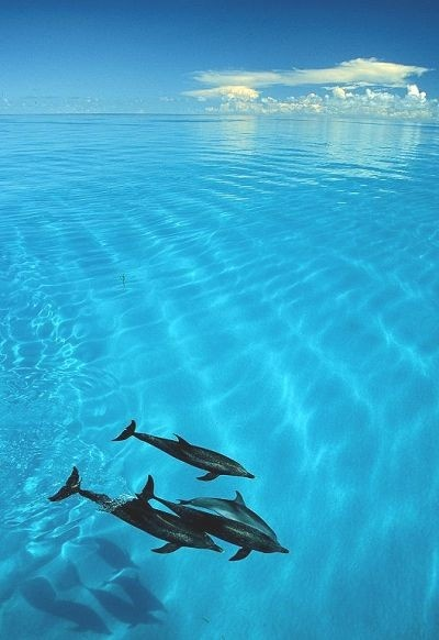 Dolphins in Clear Water... #SunSandSea #pinittowinit