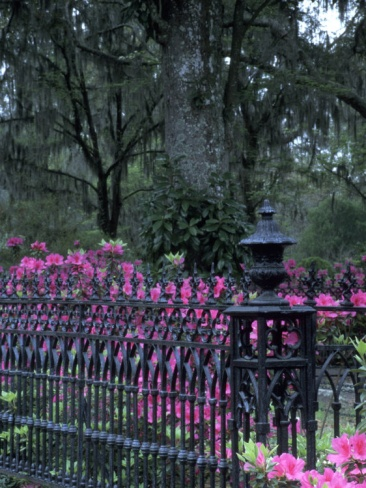 bonaventure cemetery savannah - Google Search