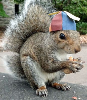 Penn State student Mary Krupa creates special hats for a campus squirrel named Sneezy.