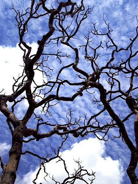 Árvore seca durante período seco do bioma cerrado