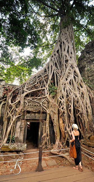 Liz... August 4, 2013 ...Ta Prohm, Siem Reap, Cambodia | Flickr - Photo Sharing!