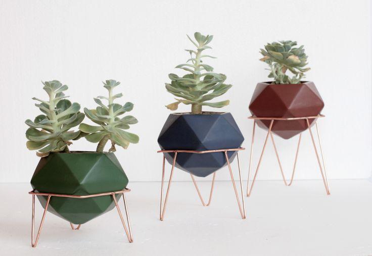 Unique plants. By Diamantina & La Perla. www.facebook.com/diamantinaylaperla