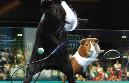 Tennis playing guinea pigs