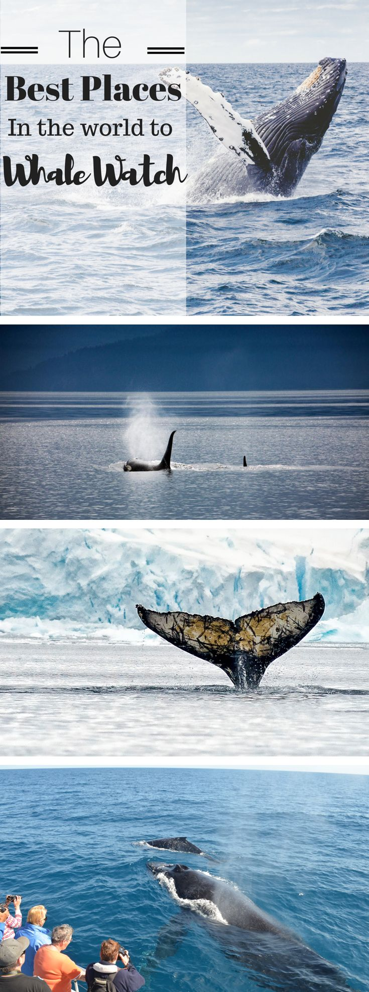 7 of the best places in the world to go whale watching, from Alaska to Australia, and Antarctica to South Africa.