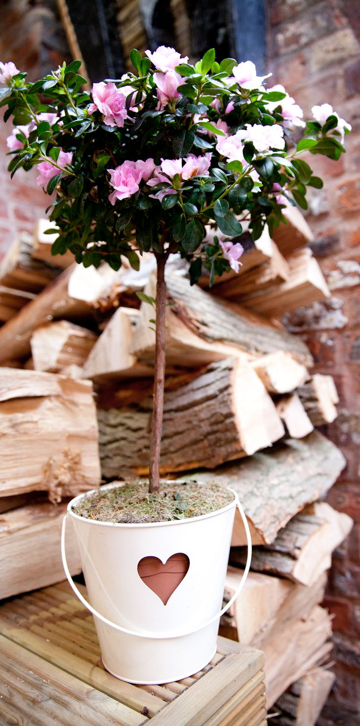 Pink flowers and green foliage set off in a rustic heart bucket.