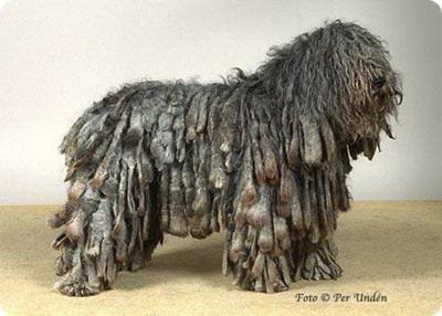 Komondor: Dogs Dogs, Doggies Dreads, Komondor Doggies, Komondor Ew, Pet, Dogs Show, Bath, My Friends, Animal Dogs