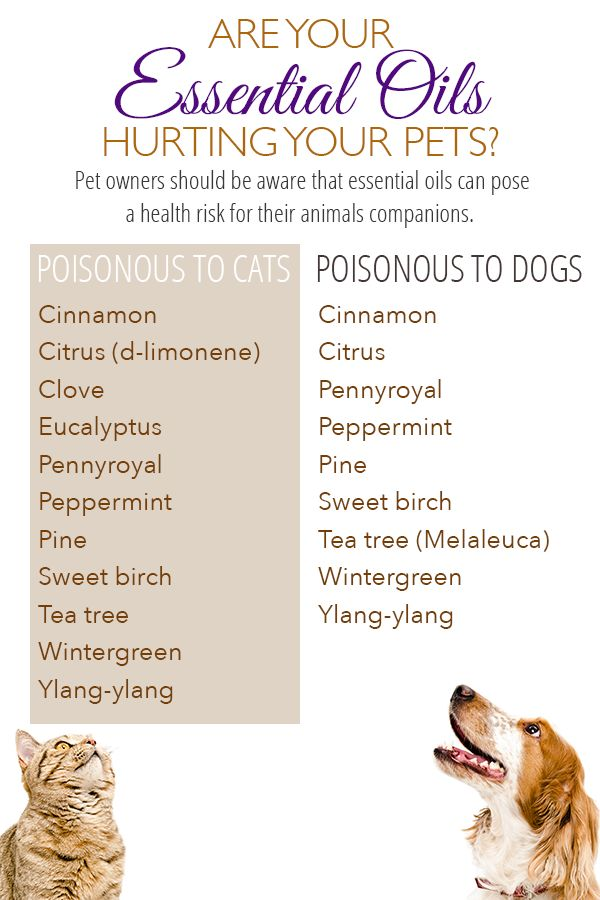 pet owners should be aware that essential oils can pose a health risk for their animal companions