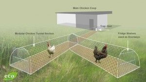 """Chicken tunnel - great idea for raising """"free range"""" chickens, but keeping them out of your garden!"""