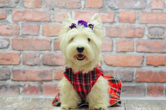 Red plaid tartan scottish dog dress, created for westie walks