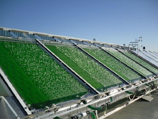 Biocombustibles de tercera generación: algas para producir bioetanol.