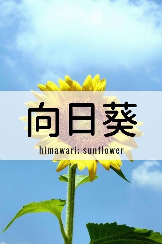 One Kanji a Day向日葵、himawari; sunflower