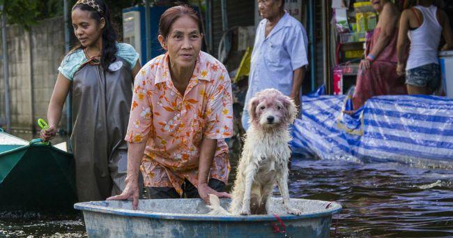 Cani e gatti: kit di emergenza per disastri ed evacuazioni