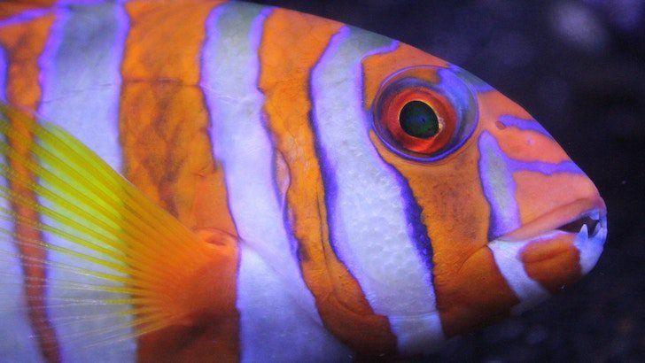 Quiz How Much Do You Know About Fish Aquarium Fish Pocket Pet Fish Pet