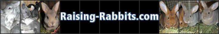 Breeding, Raising & Caring for your rabbits