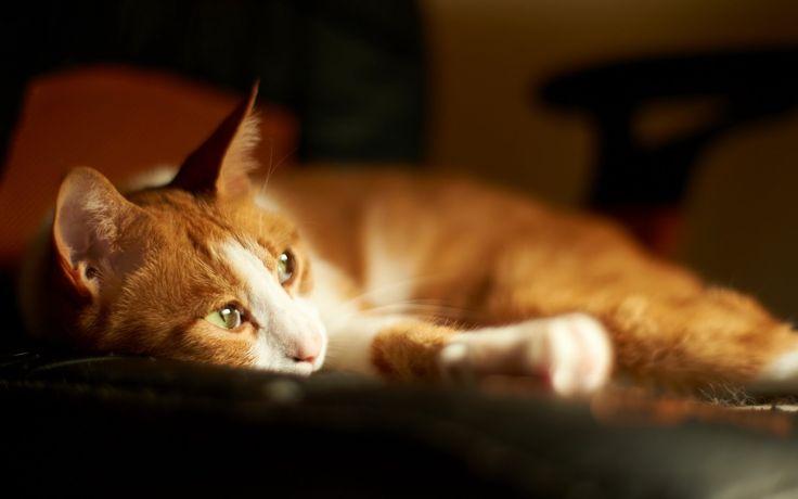 Кошки - Таинственные Существа Исцеляют И Предсказывают!